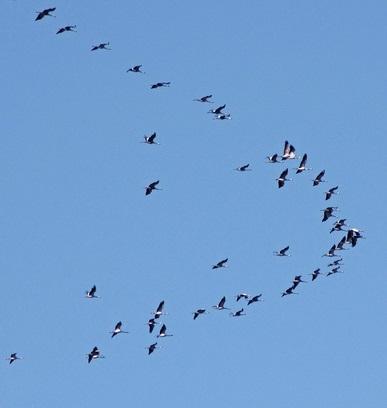 Exemple d'application aux oiseaux