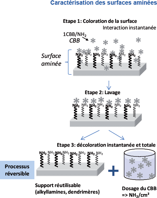 Caractérisation des surfaces aminées
